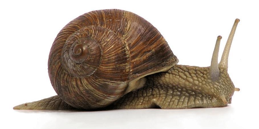 Śluz ślimaka na zmarszczki! Thumbnail